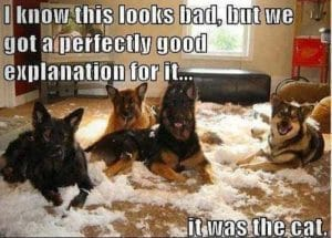 Dogs Destroy Furniture and Blame It On The Cat