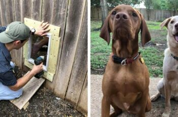 two pics of dogs and a pic of a man putting a doggy door in a fence for them to visit thru