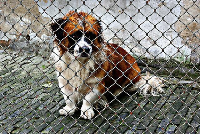 animal welfare, dog, imprisoned