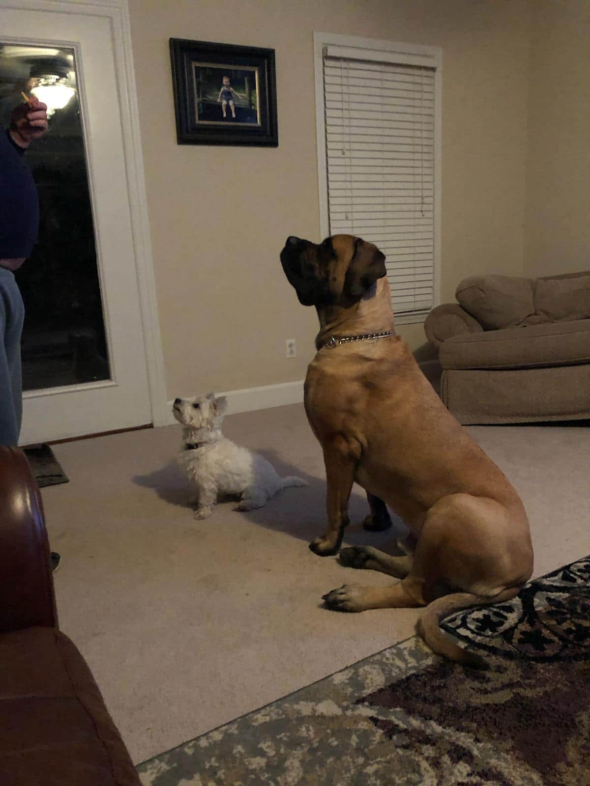 Huge dog and his tiny buddy at attention