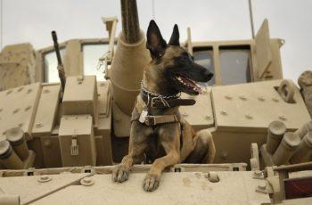 War Hero, K-9 Division