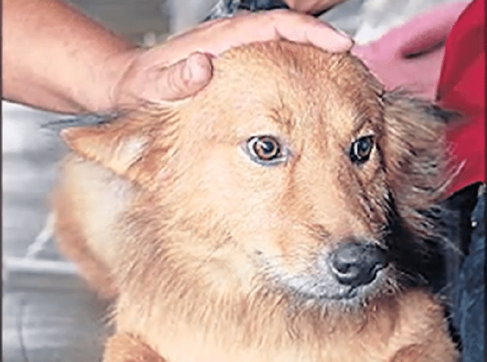 heroic stray dog being petted