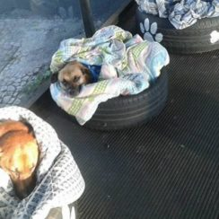 3 stray dogs in tire beds
