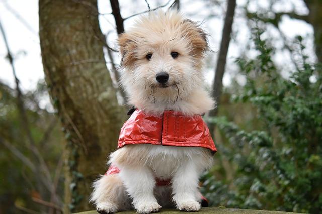 dog, dog wears a RAIN Coat, pup