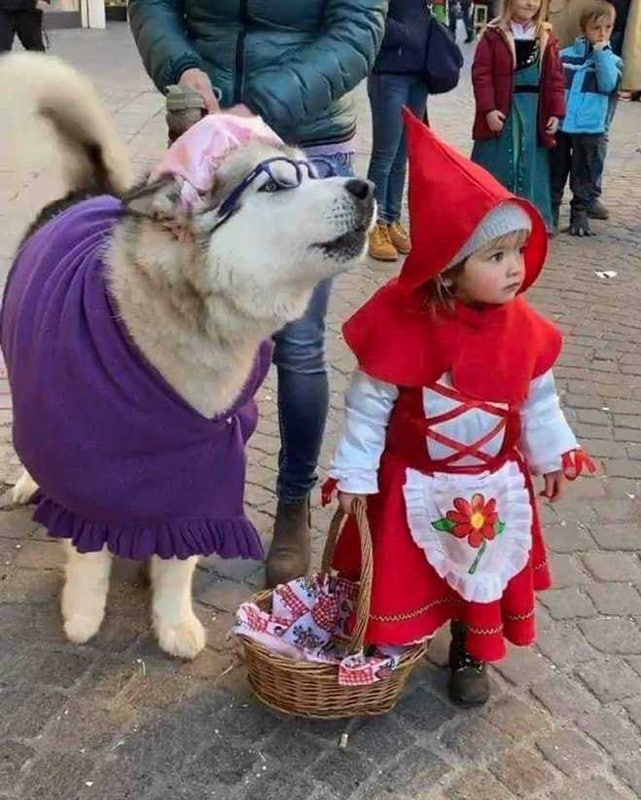 Little Red Riding Hood and the Big Bad WOlf dresses as granny