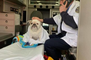 Tuff in ambulance being checked out