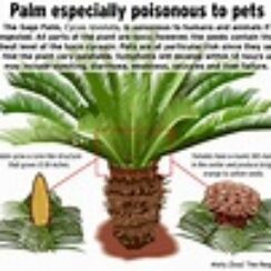 All parts of this plant can kill a dog
