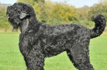 One of the most expensive dog breeds on the planet