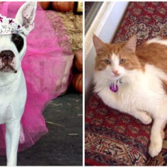 dog and cat winners of wackiest names contest