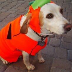 Hound n Hallowen costume