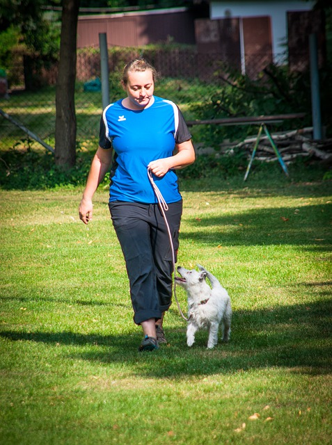 Walk your Dog to Raise Money for A Shelter