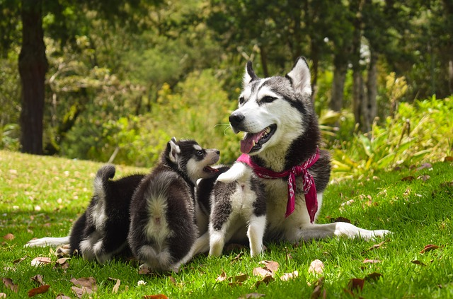 pets, dogs, family
