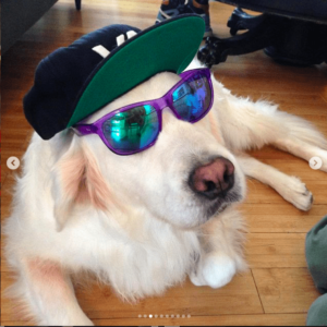 White dog with cap and sunglasses