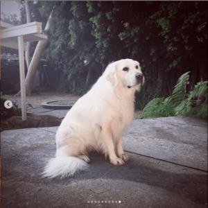beautiful white dog sitting on the patio alone