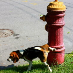 dog and fire hydrant