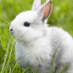 white bunny on grass is one of the back-yard buddies